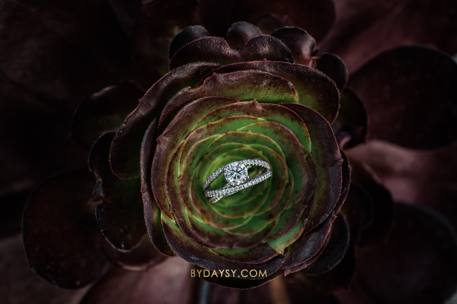 close up engagement ring on a succulent in Surreybrooke