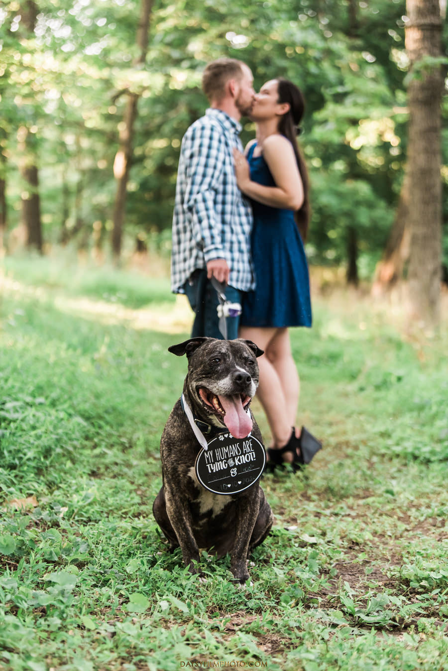 Gambrill State Park Engagement Photos with dog